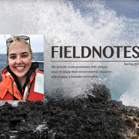 Field Notes Amy Larsen Image