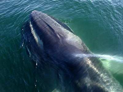 Singing Whales Steal Spotlight from Earthquakes