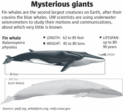 Scientists track giant whales by their earthshaking calls